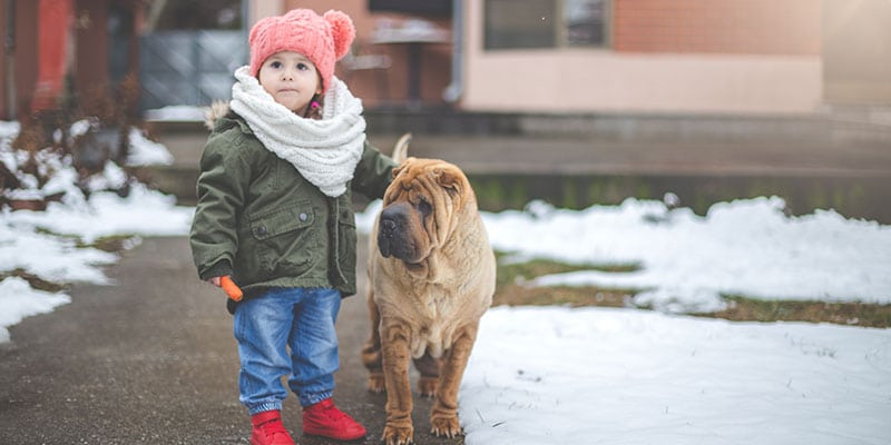 child with large brown dog outside in the snow